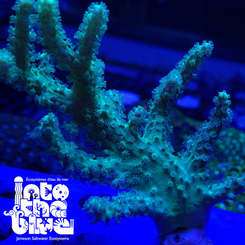 Ultra Green Leather Frag(*RARE*)