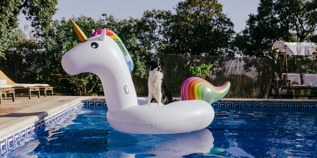 dog summer essentials hot weather pool toy