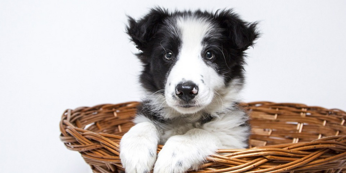 4 Questions To Ask Yourself Before Getting A New Dog