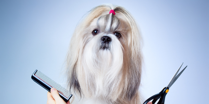 6 Ways To Groom Your Dog At Home