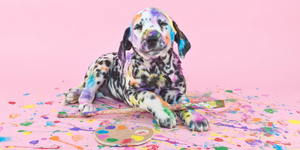 dalmatian puppy dog paint color colorful art pallette paintbrush pink