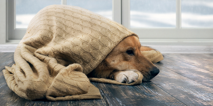 What Temperature Is Too Cold For My Dog?