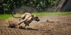 The 17 Fastest Dog Breeds In The World