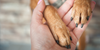 Why Dogs Need Their Nails Trimmed And How Often To Do It
