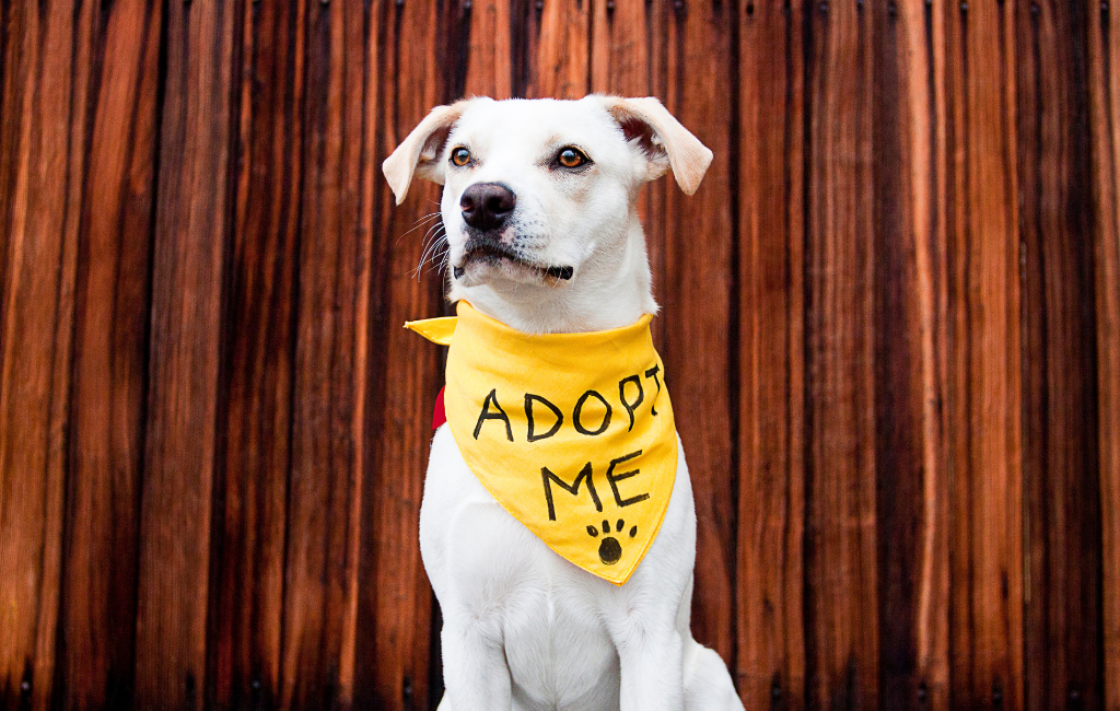shelter rescue dog adoption adopt a dog mutt mixed breed