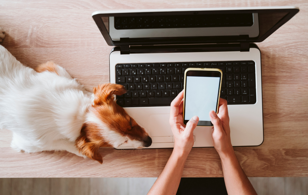 dog resting on person's laptop and phone