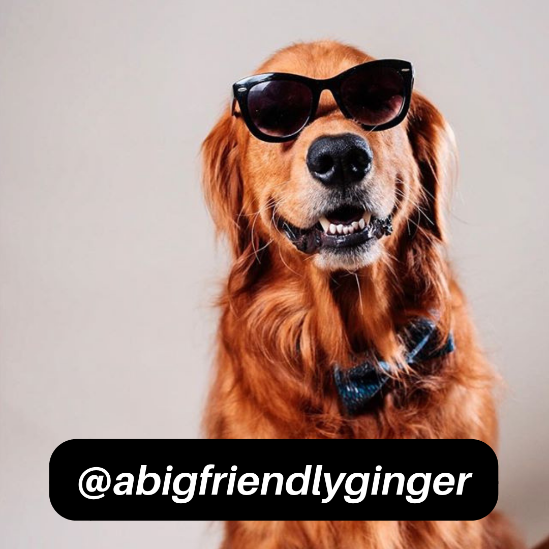@abigfriendlyginger on Instagram