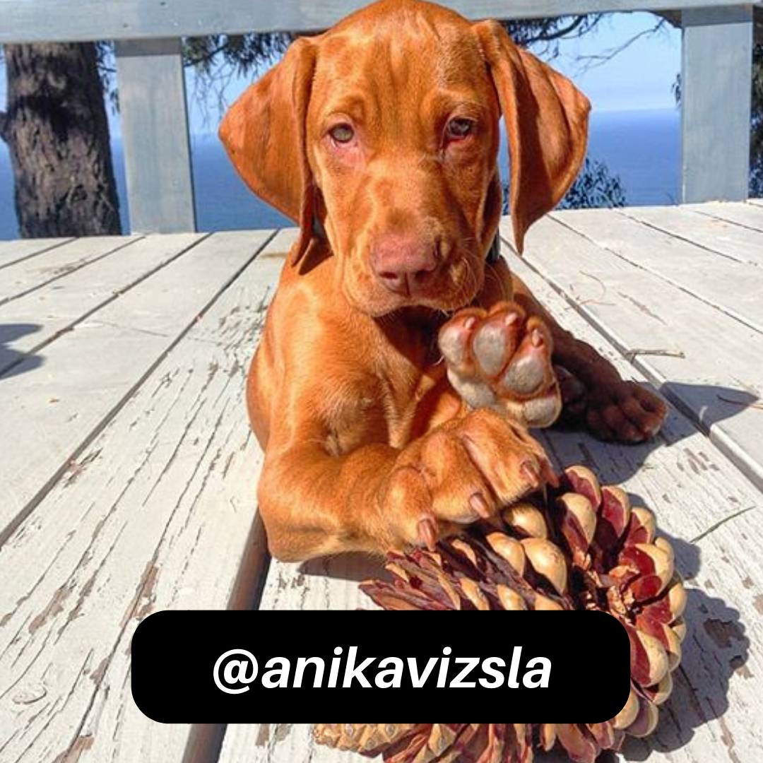 @anikavizsla on Instagram
