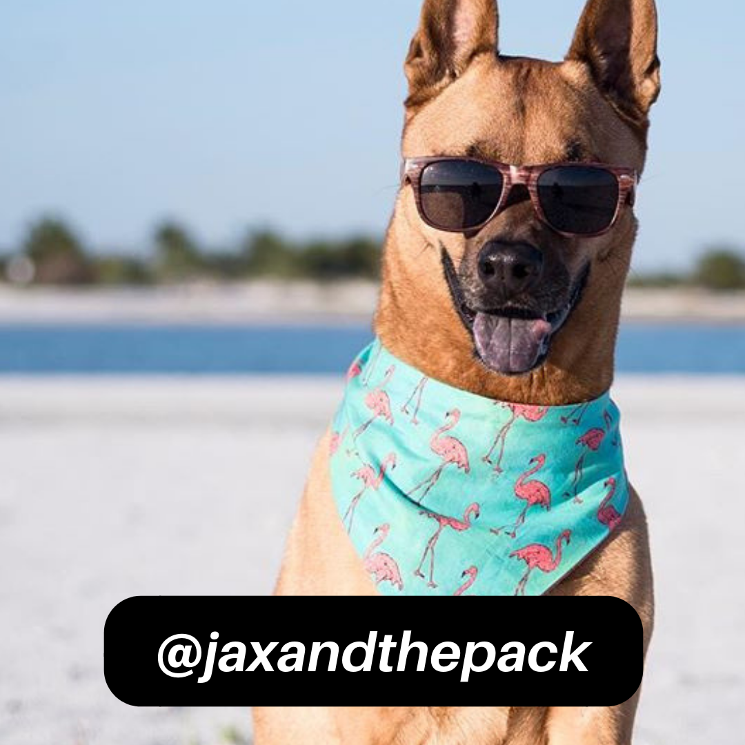 @jaxandthepack on Instagram