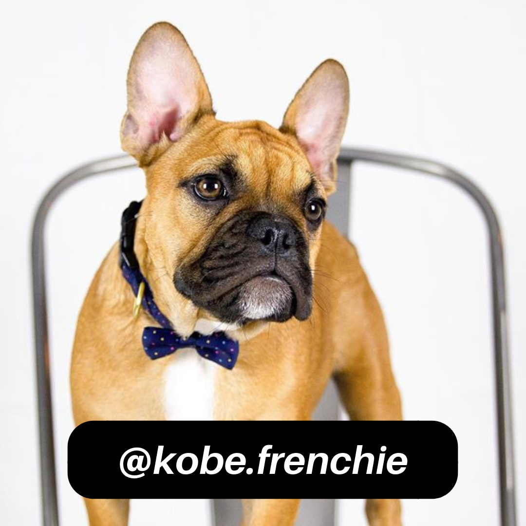 @kobe.frenchie on Instagram