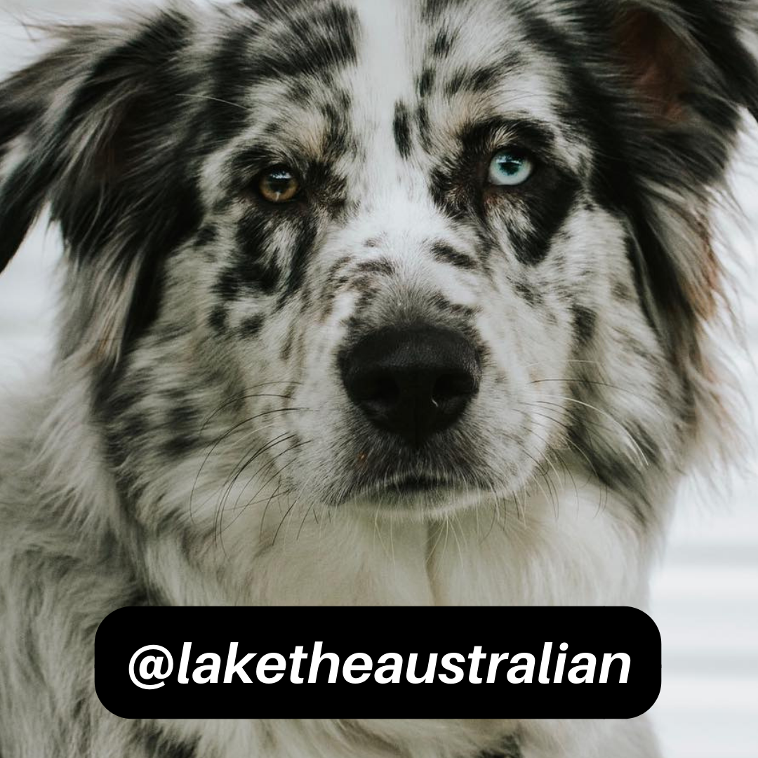 @laketheaustralian on Instagram