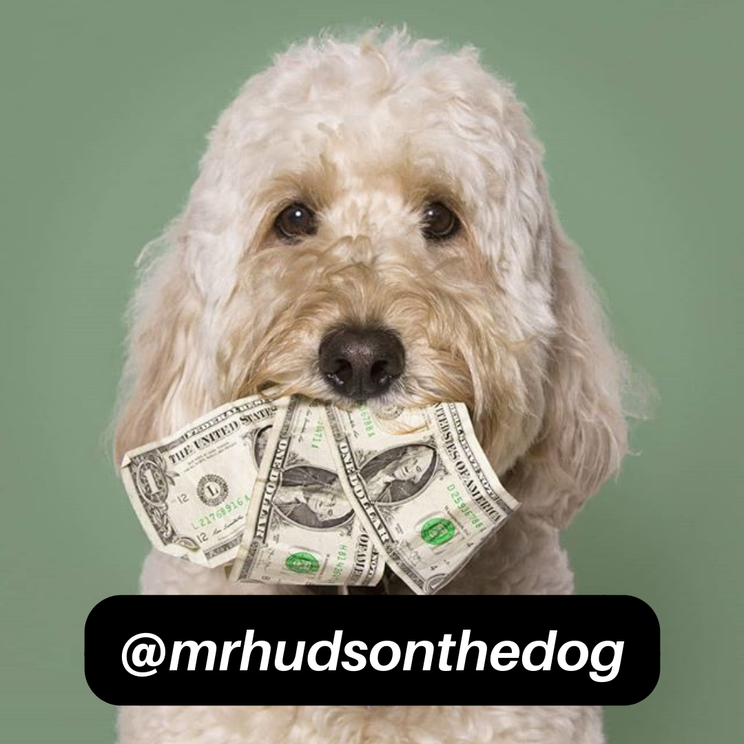 @mrhudsonthedog on Instagram
