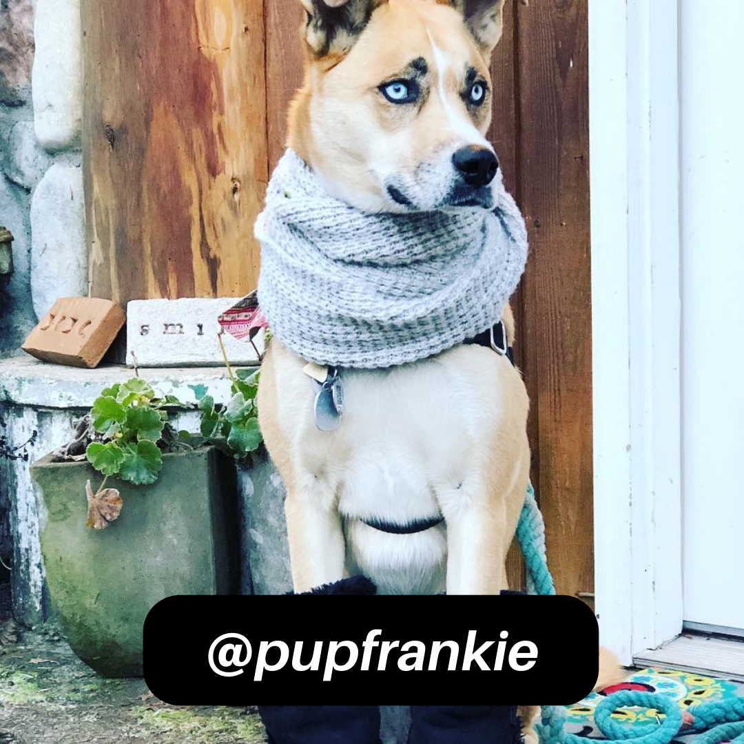 @pupfrankie on Instagram