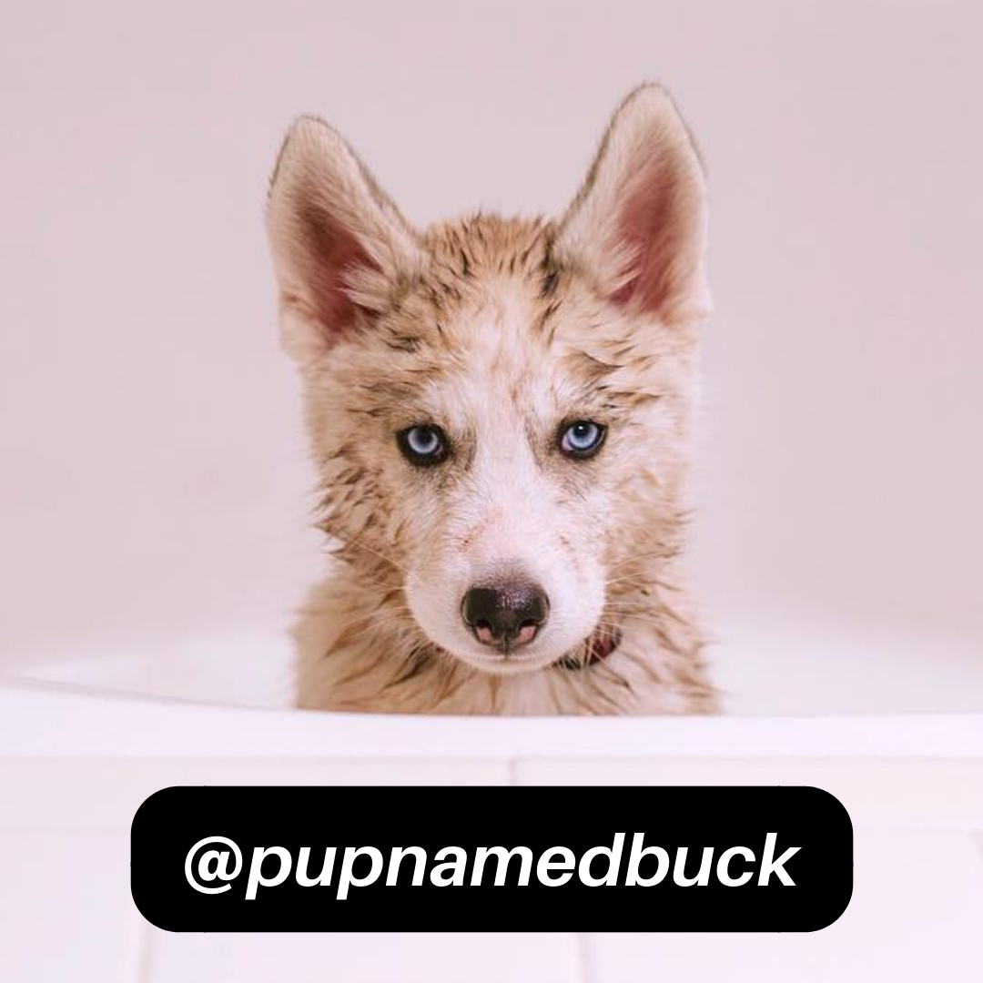 @pupnamedbuck on Instagram