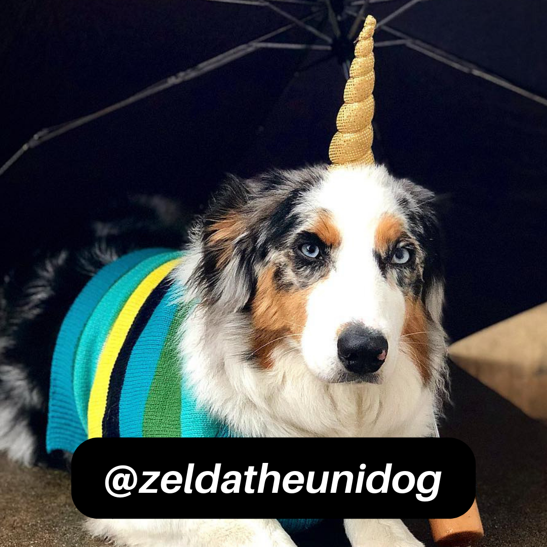 @zeldatheunidog on Instagram