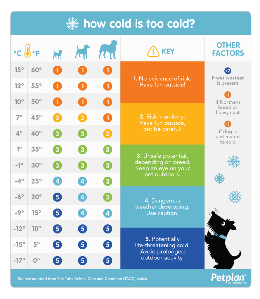 how cold is too cold for your dog? pet plan insurance