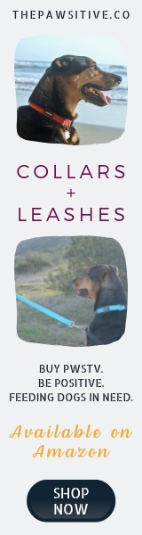 Collars and Leashes on Amazon