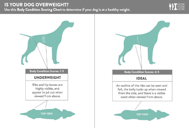 dog body weight score 1