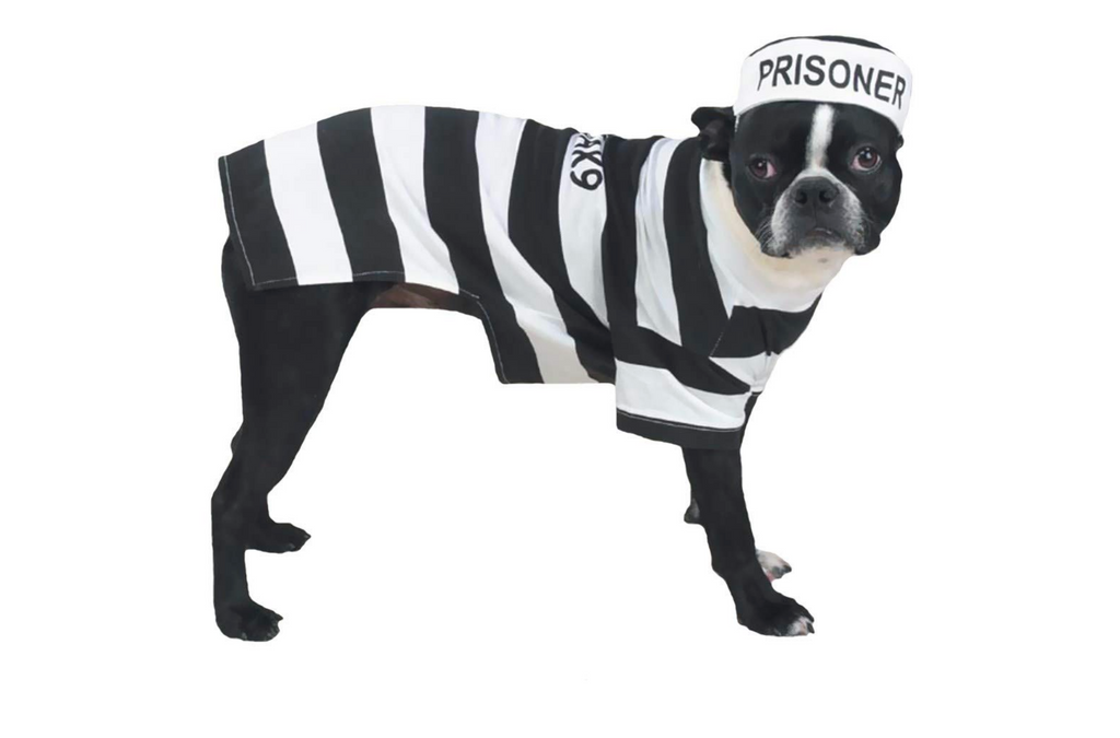 dog costume prisoner