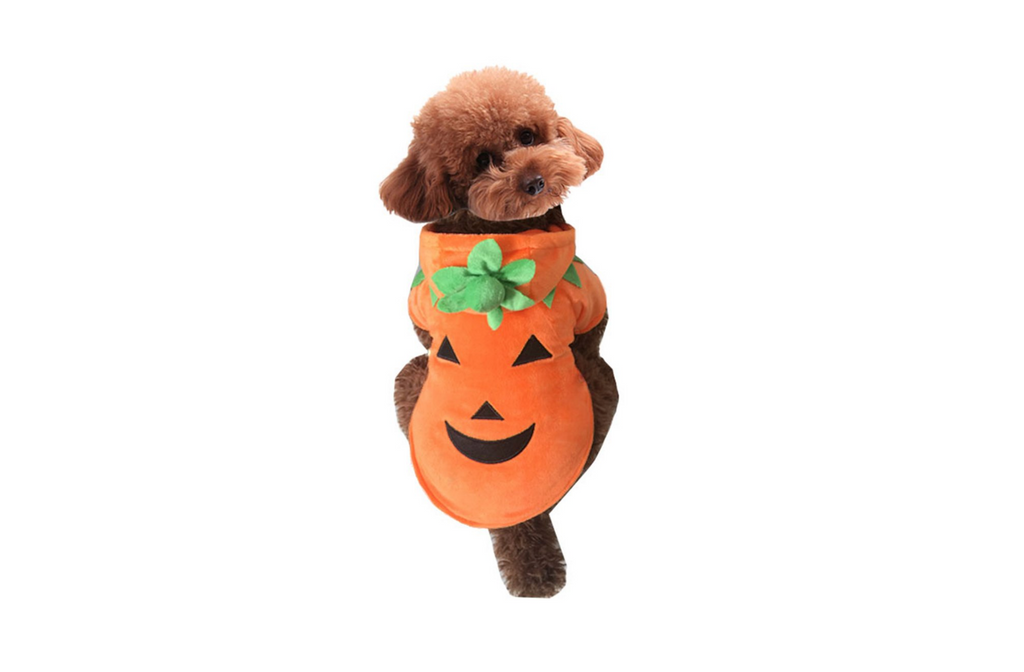 dog costume pumpkin