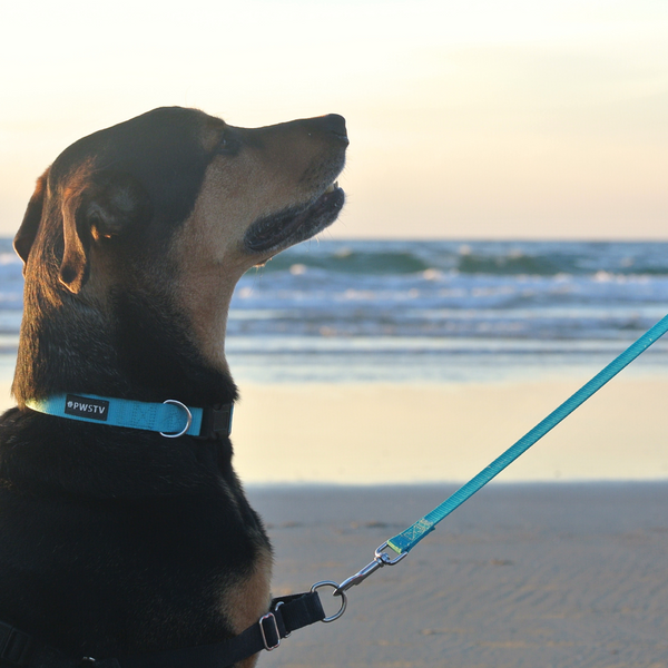 Original Series Leash - Turquoise | Buy a Leash. Feed a Dog. Durable Nylon Puppy and Dog Leash