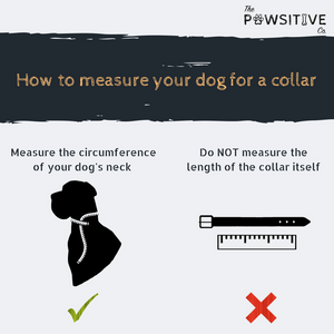 FREE. Just pay Shipping | Buy a Collar. Feed a Dog. The Pawsitive Co Durable Nylon Puppy and Dog Collar | Blue
