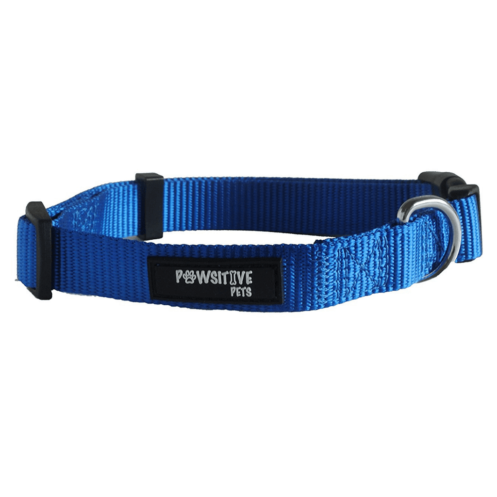 Blue Dog Collar Main Image