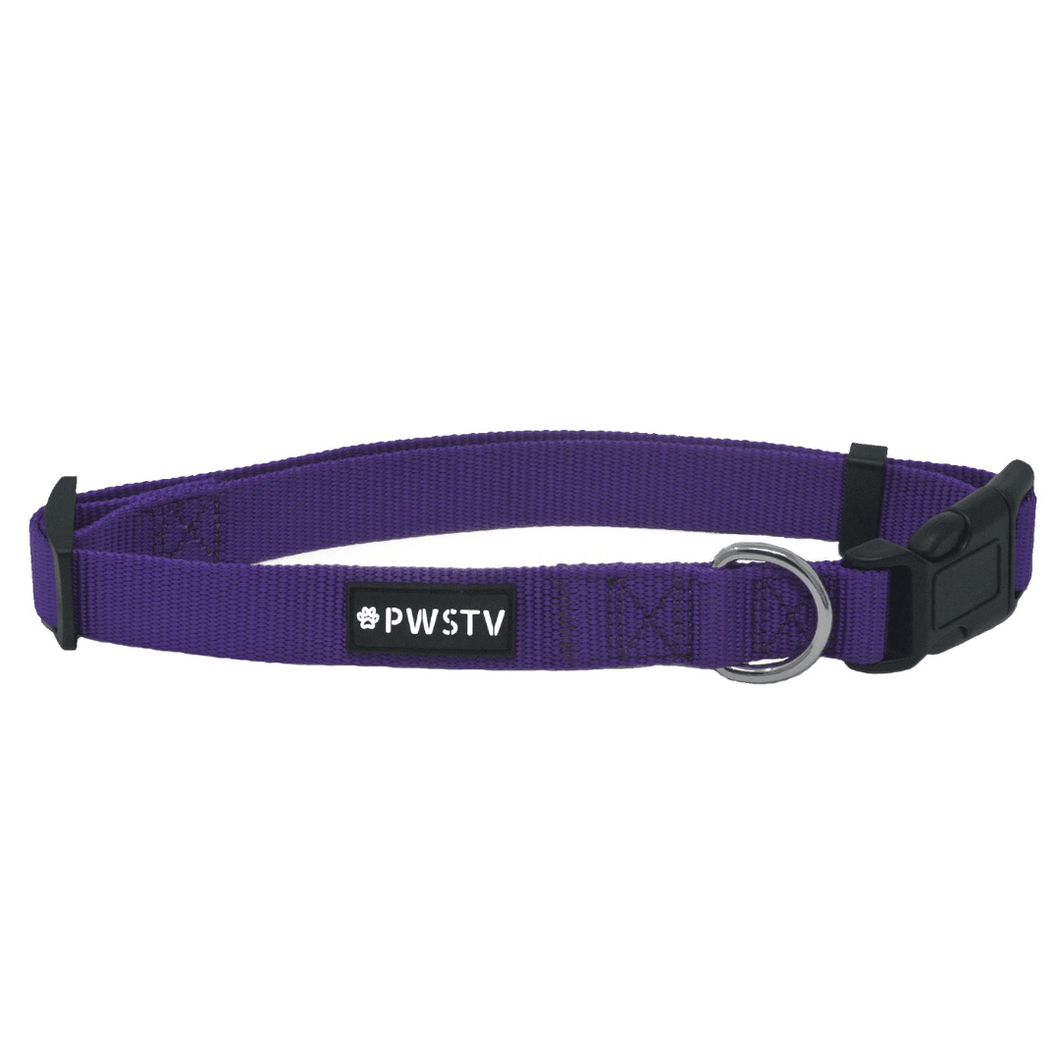 Purple Dog Collar Main Image