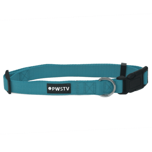 Turquoise Dog Collar Main Image