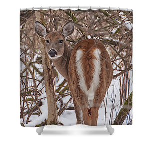 Chevreuil - Shower Curtain - 71 X 74 Standard - Shower Curtain