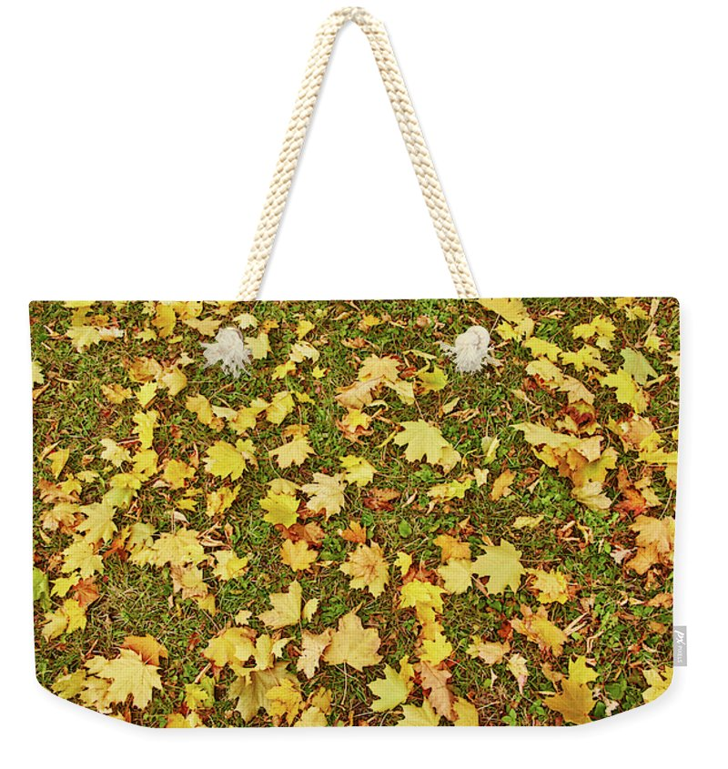 Maple Leafs On The Ground - Weekender Tote Bag - 24 X 16 / Natural - Weekender Tote Bag