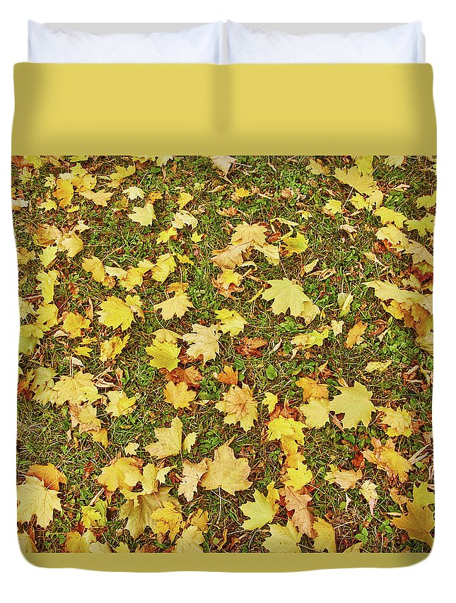 Maple Leafs On The Ground - Duvet Cover
