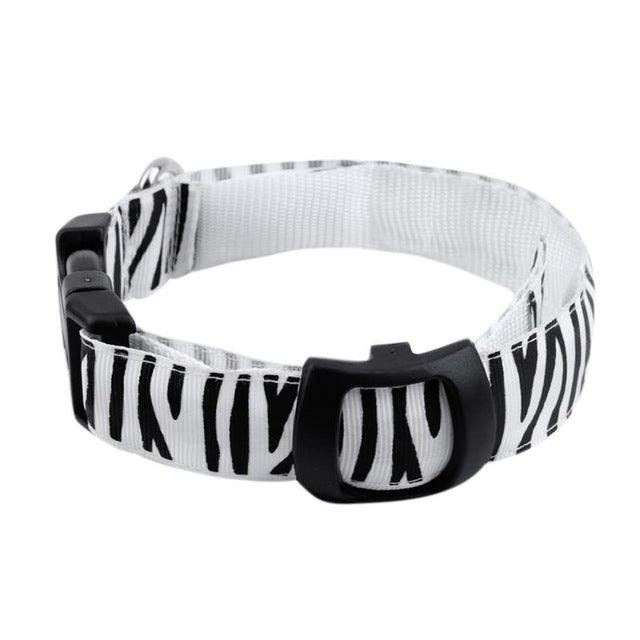 Led Dog Collar - White / S - Pet Products