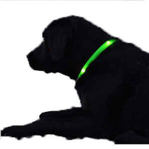 Led Dog Collar - Assorted Colors And Sizes - Pet Products