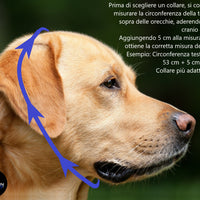 Collare a serpentina BLACK/ antracite - Reborn dog™