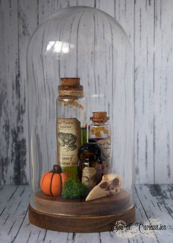 Apothecary Inspired Glass Cloche Display (UK only)