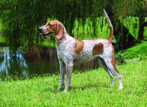 5D Diamond Painting American English Coonhound Kit