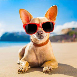 5D Diamond Painting Chihuahua with Sunglasses Kit