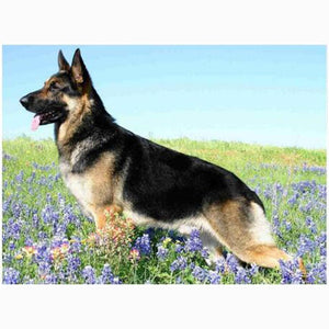 5D Diamond Painting German Shepherd in Flowers