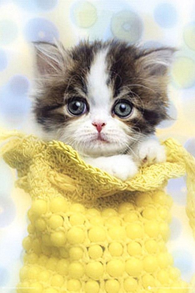 5D Diamond Painting Kitten in a bag Kit