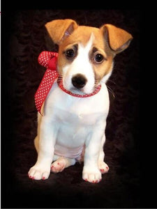 5D Diamond Painting Red Polka Dot Bow Jack Russel Terrier Kit