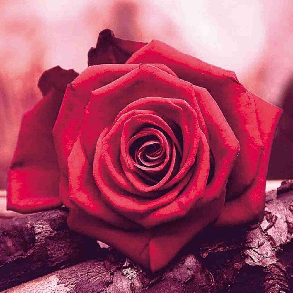 5D Diamond Painting Red Rose on Wood Kit