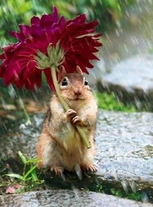 5D Diamond Painting Squirrel in the Rain Kit