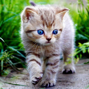 5D Diamond Painting Striped Blue Eye Kitten Kit