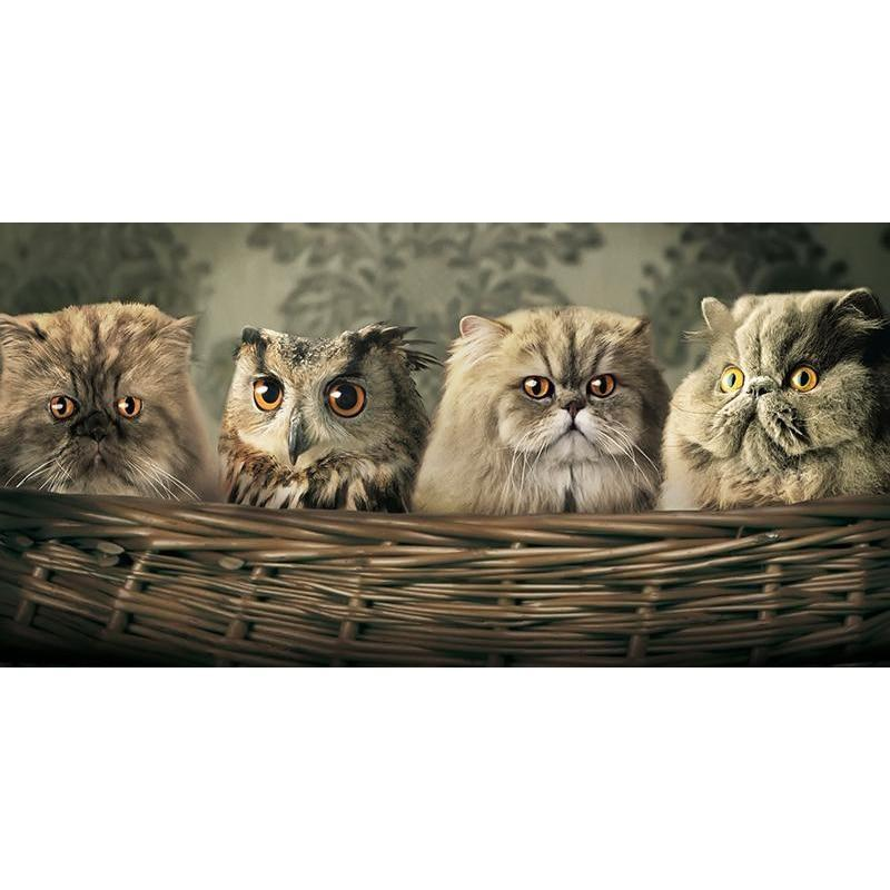 5D Diamond Painting Three Cats and an Owl Kit
