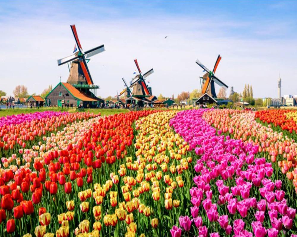 5D Diamond Painting Tulip Field Windmills Kit