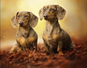 5D Diamond Painting Two Piebald dachshunds Kit