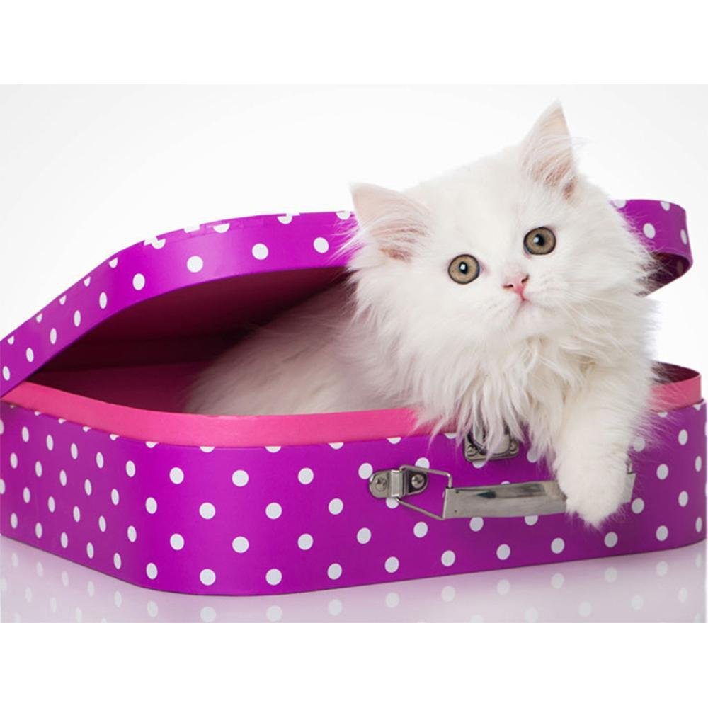 5D Diamond Painting White Kitten Purple Box Kit
