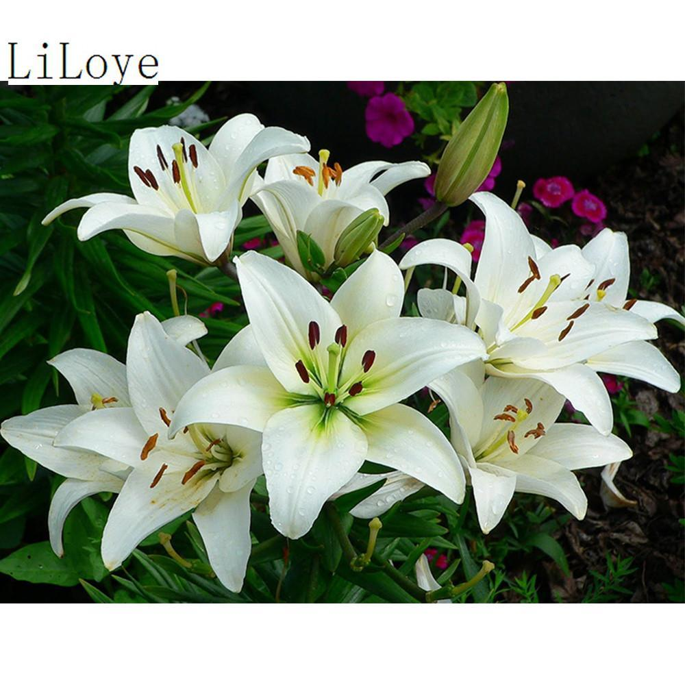 5D Diamond Painting White Lily Kit