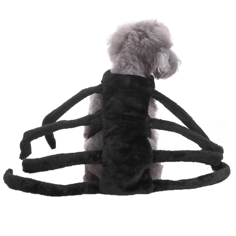 Spider Dog Costume For Halloween